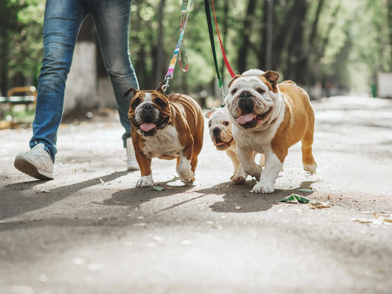 Tips and Tools to Stop Your Dog from Pulling the Leash - The