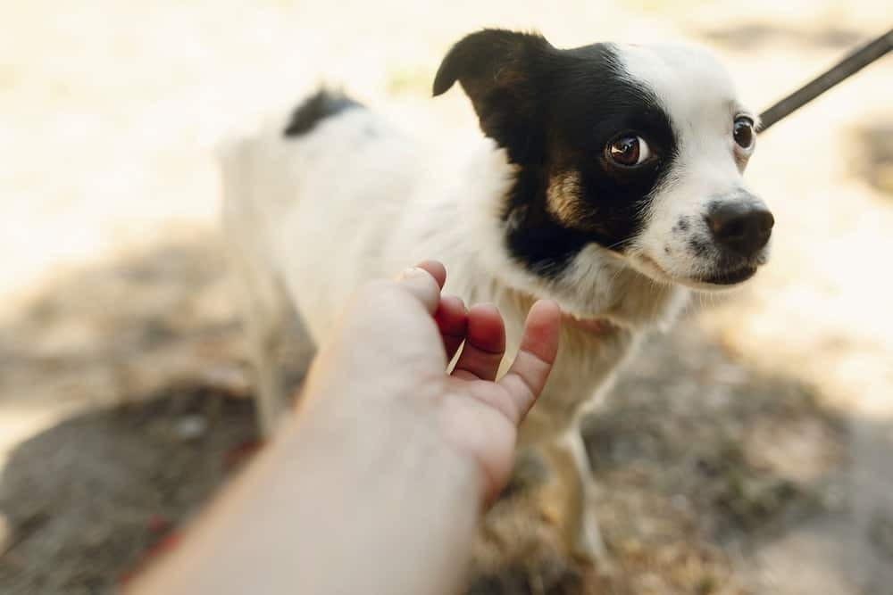 Prevention Is Key: Keeping Your Dog And Others Safe from Dog Bites