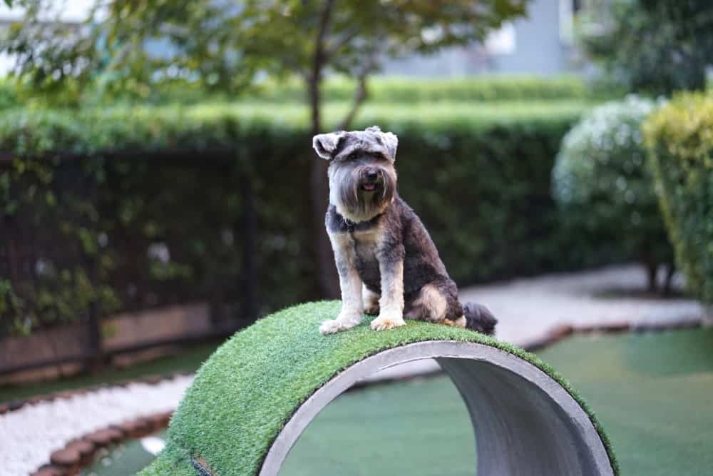 10 Amazing Backyard Design Ideas For Dogs - The Dogington Post
