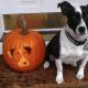 Dog-O-Lanterns