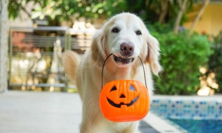 dog ate halloween candy