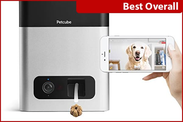 The Best Pet Cameras for Dog Owners - The Dogington Post