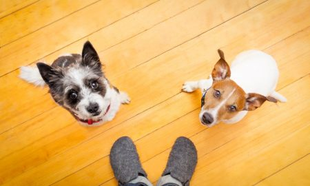 questions dog owners ask