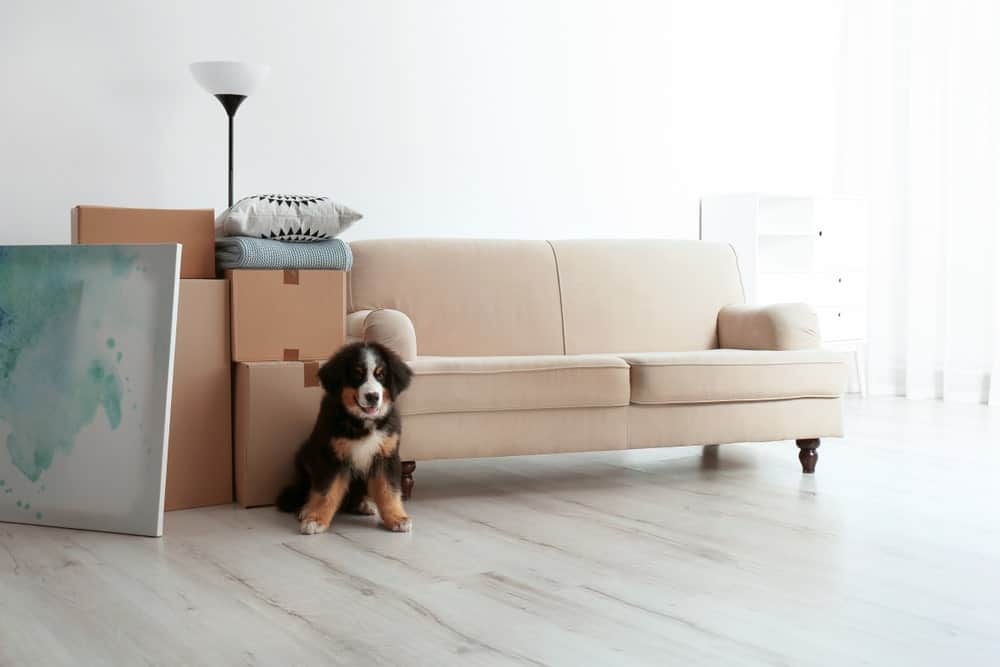 7 Things to Do for Your Pet When You Move