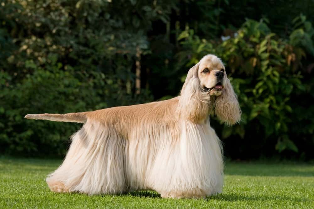 popular dog breed