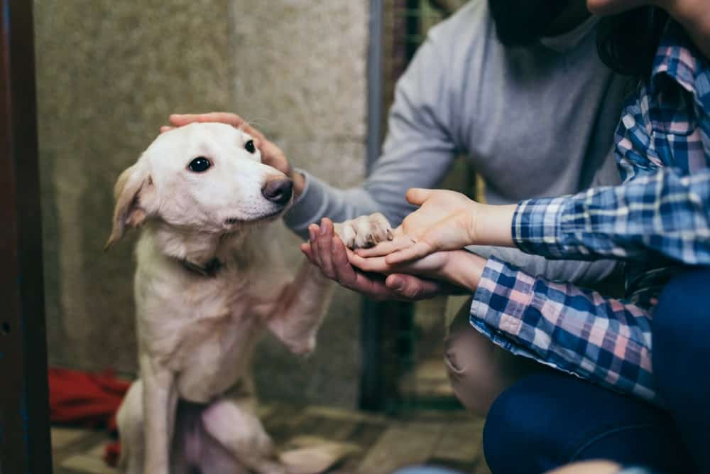 Ohio Names 'Shelter Pets' as the Official State Pet - The