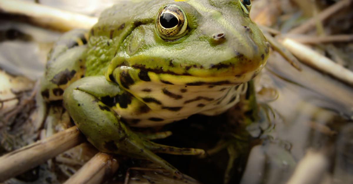 Heroic Frog Chases Off Armed Robber to Save Store Owner