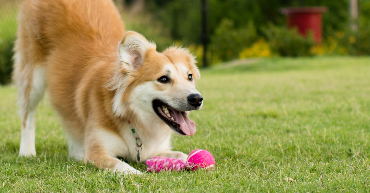 Make the Backyard a Blast With These Fun Outdoor Dog Toys ...