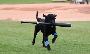 bat dog