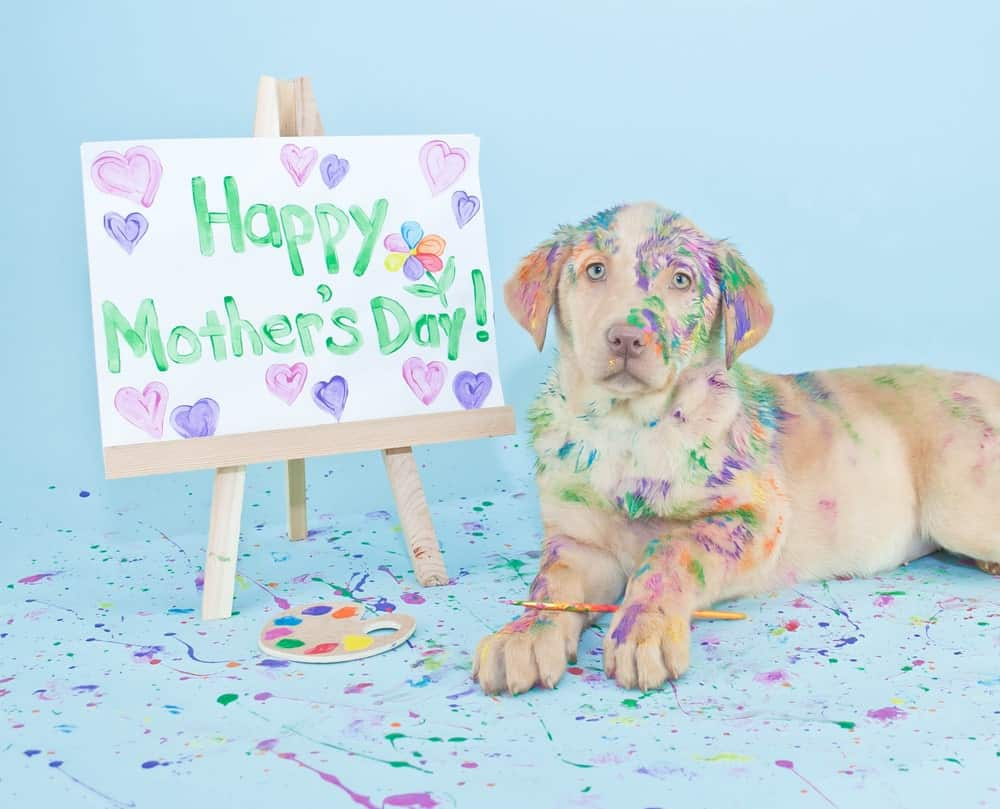 06c7f02d6 Chances are if you're reading this you know the deserving mother of a  furkid, so here are some ideas for a meaningful gift that will make her  Mother's Day ...
