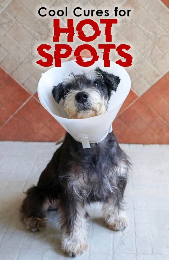 Cool Cures For Hot Spots The Dogington Post