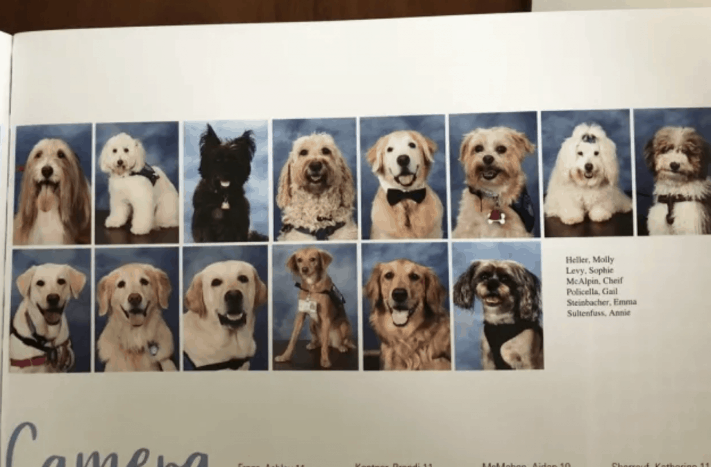 Therapy Dogs for Parkland School Shooting Featured in Yearbook