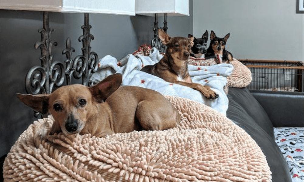 canine estates