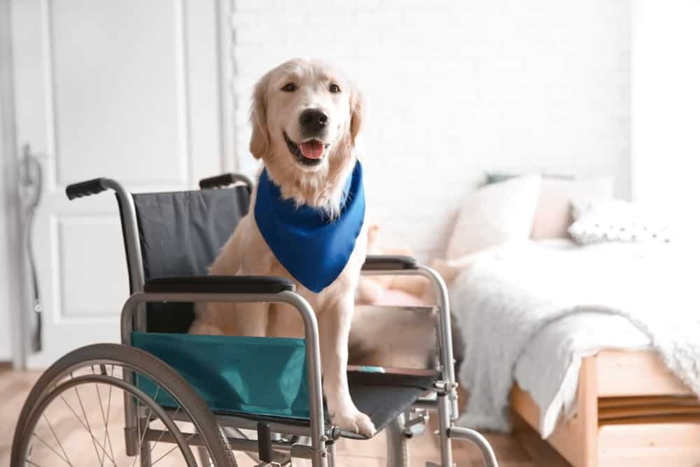 dogs in healthcare