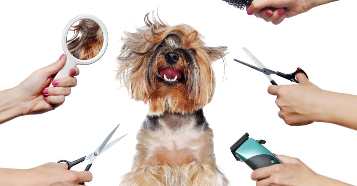 Dog Grooming, Peoria IL | My Dog's Bakery Daycare & Grooming |Dogs Grooming