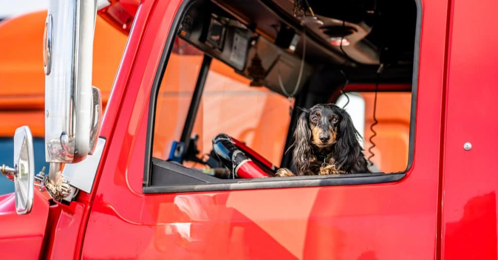 trucking with dogs
