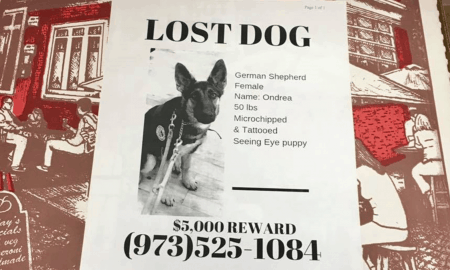 lost pets