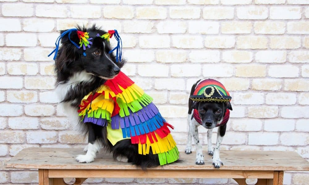 DIY dog costumes
