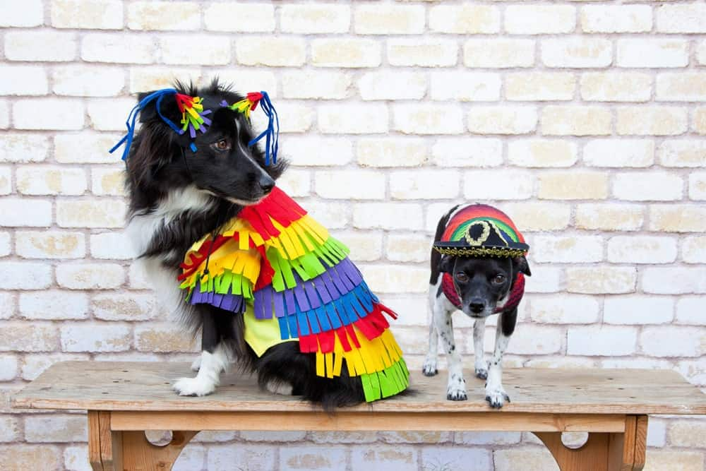 7 Adorable (And Easy!) DIY Dog Costumes