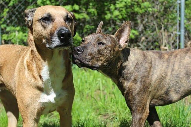 breed rescue