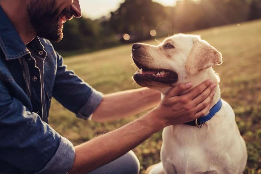 health benefits of having dogs