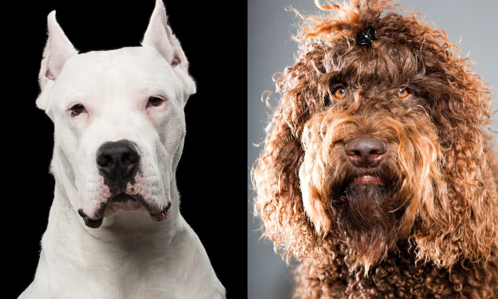 new breeds
