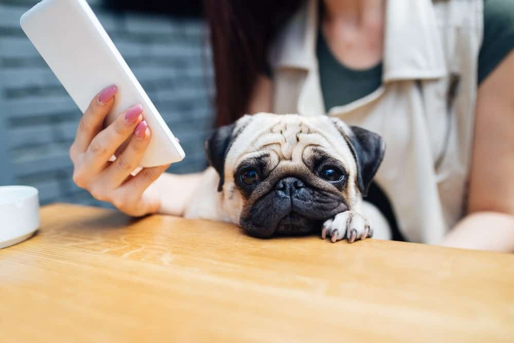 pet sitting apps