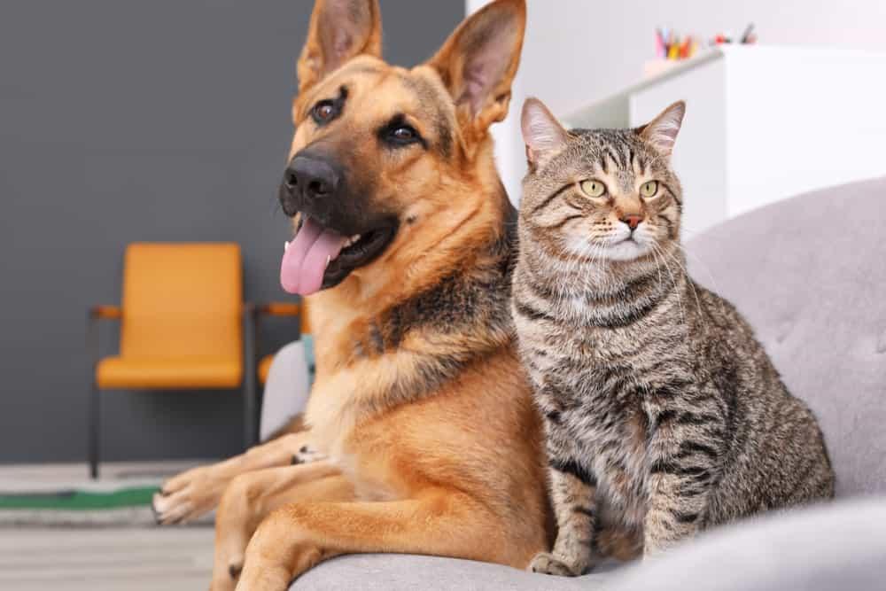 pet-friendly households