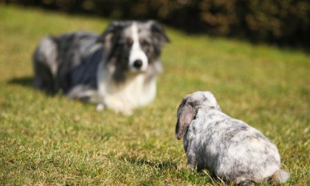 dog and rabbit