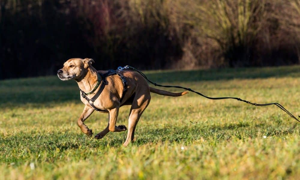 How to Prevent and Respond to Your Dog Running Away - The Dogington Post