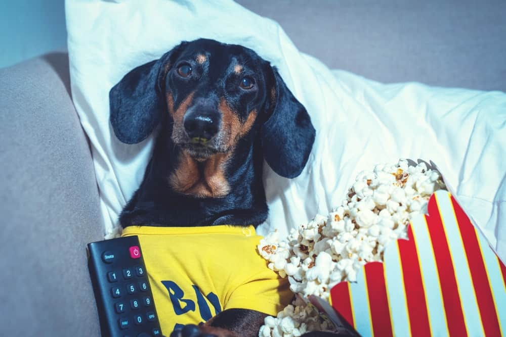 movies starring dogs