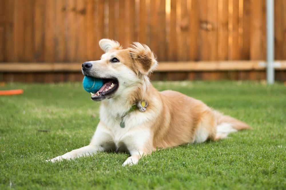 dog-friendly backyard