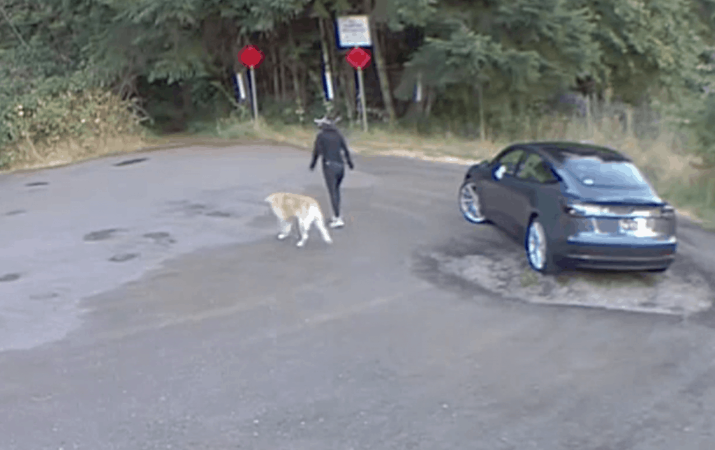 Woman Caught on Camera Abandoning Dog Charged with Animal Cruelty ...