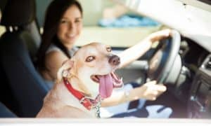 best cars for dog lovers