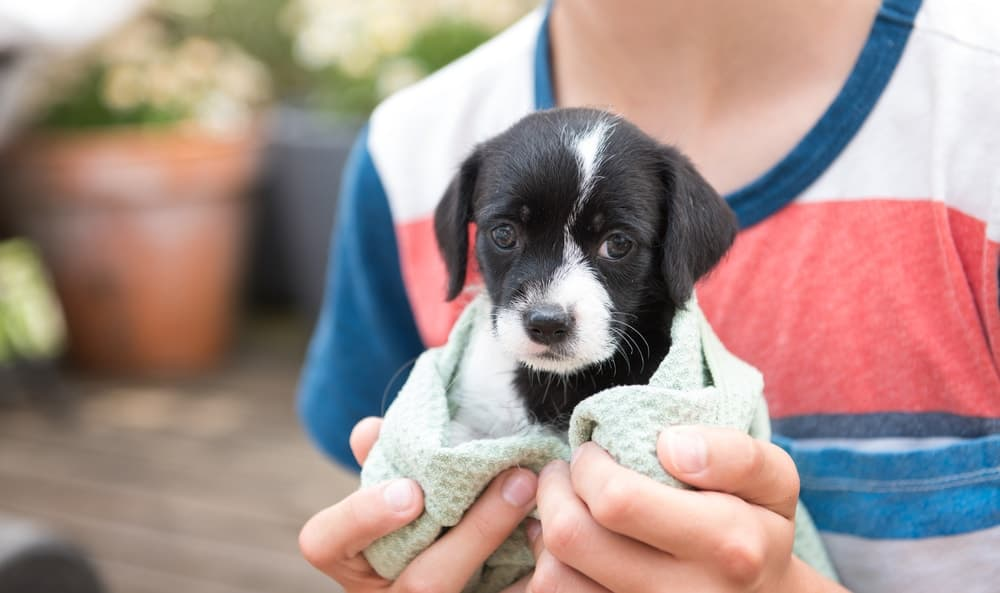 rescue a puppy