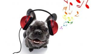 christmas song for dogs